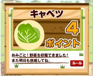 100602EC野菜キャベツ4.jpg