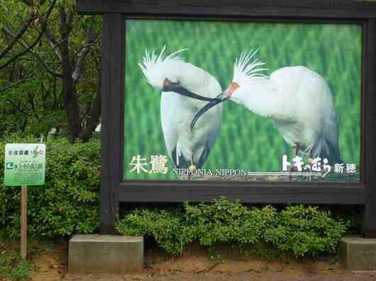 490トキの森公園1.jpg