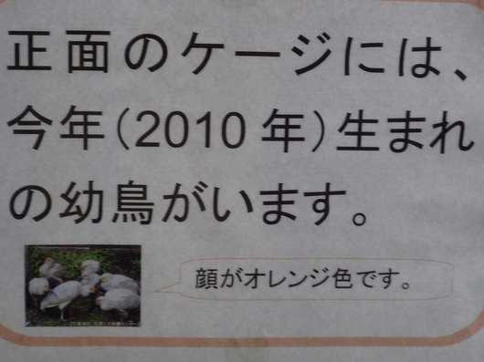 490トキの森公園12.jpg