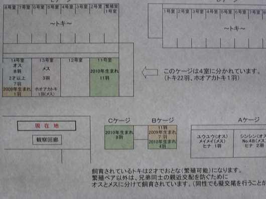 490トキの森公園15.jpg
