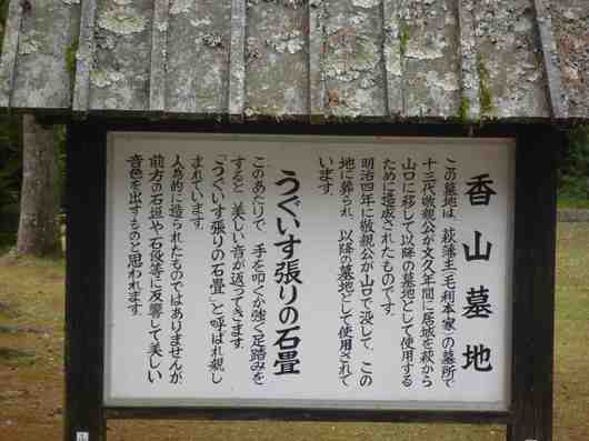 775香山墓地うぐいす1.jpg
